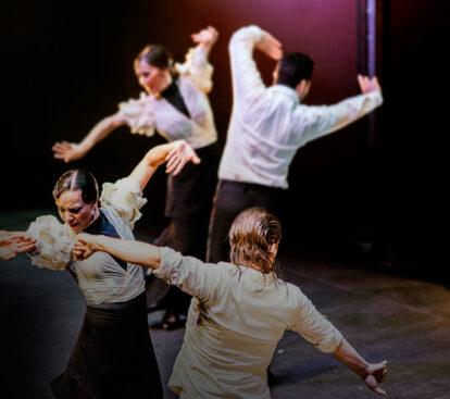 imagen_educacion_flamenco